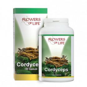 Cordyceps 100 Capsule Flowers Of Life